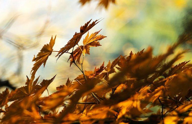 nettoyer les feuilles mortes