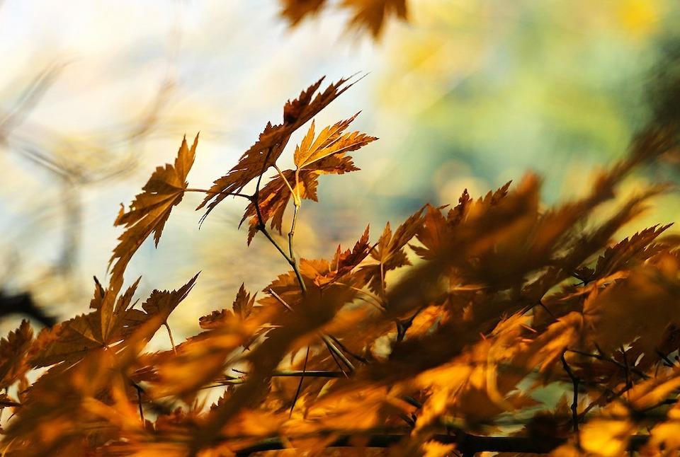 Comment utiliser un souffleur de feuilles ?